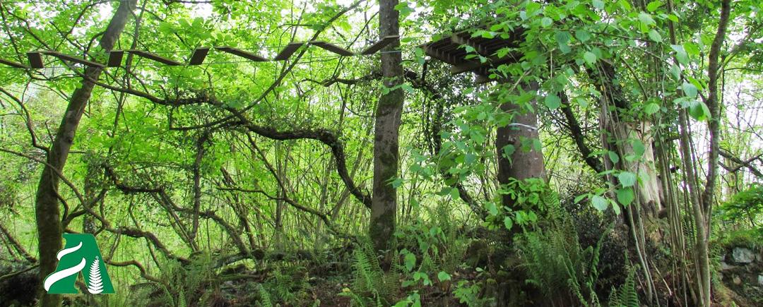 Laser tag en selva asturiana